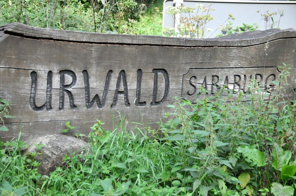 170826-Urwald-01