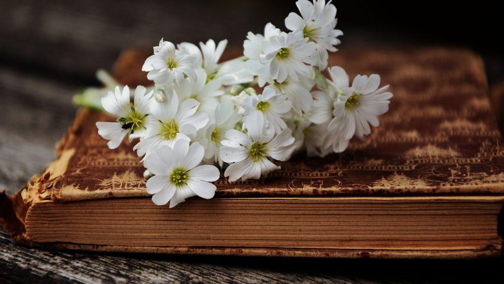 book-2363912_1920